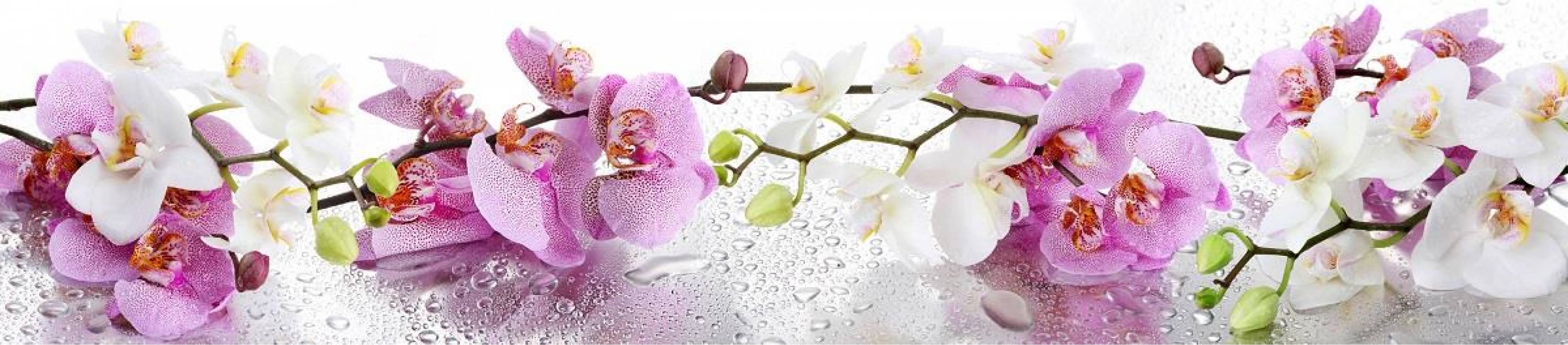 Кухонная панель 2800 мм AL-30 Нежные орхидеи Матовая ALDIO